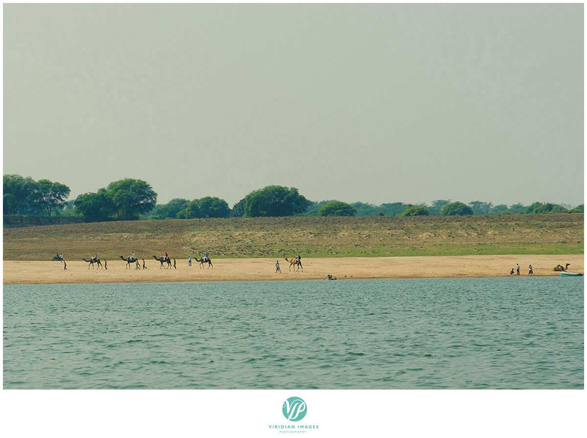 India_Chambal_Safari_Viridian_Images_photo_5