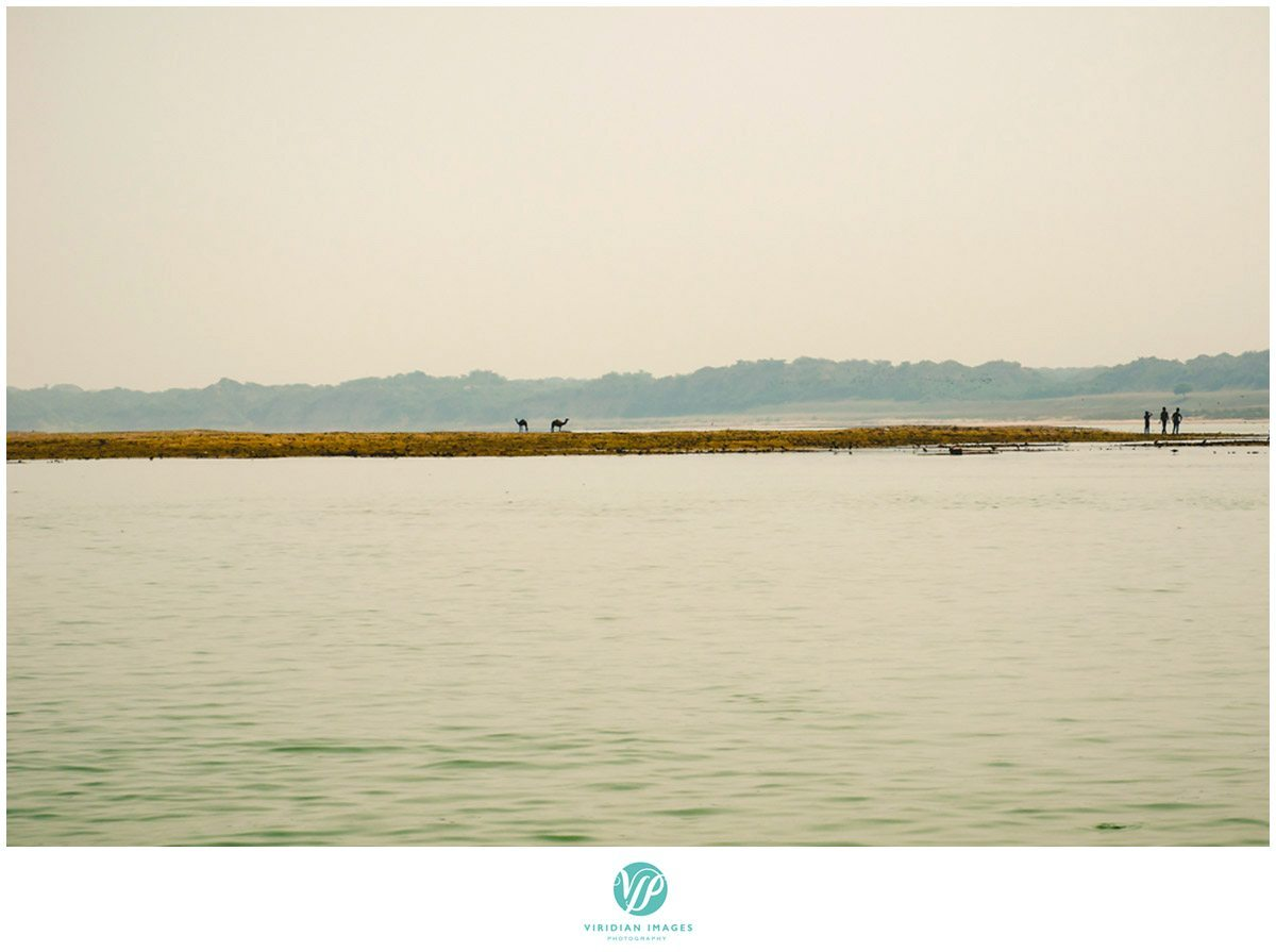 India_Chambal_Safari_Viridian_Images_photo_8
