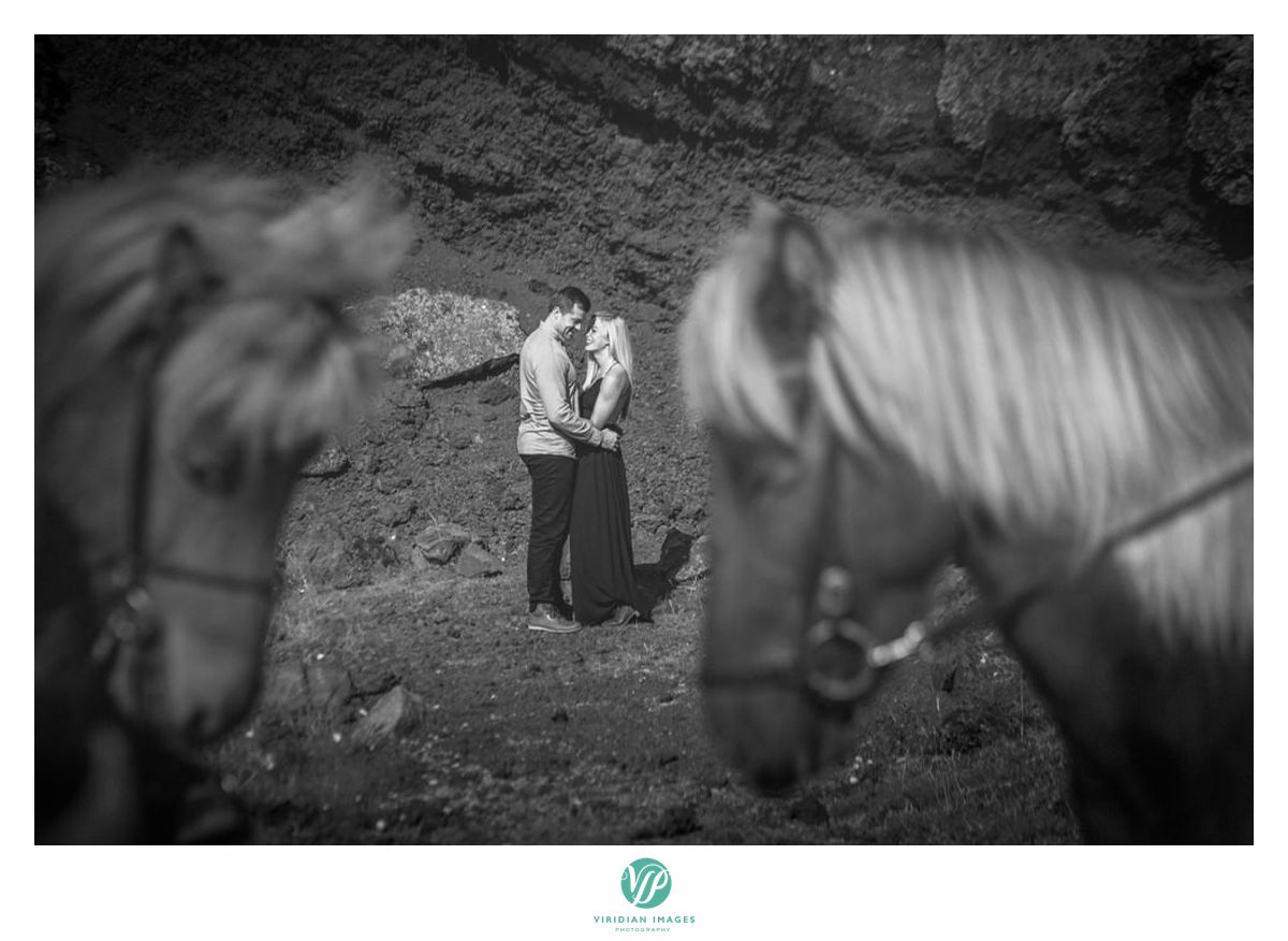 iceland-engagement-destiation-horses-viridian-images-photography-9