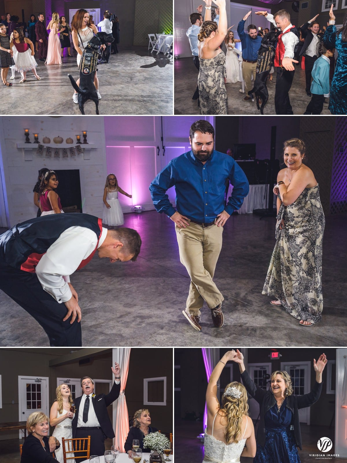 party dancing service dog walnut hill farm dalton ga
